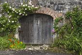 Charming pink and white rose covered grey stone and brick wall and stable doors in Northern Irish village. Horizontal format. poster