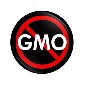 A black and red button with word GMO and not symbol isolated on white Stop using GMO food poster