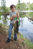 A young fisherman proudly holds up a stringer of nice walleyes poster
