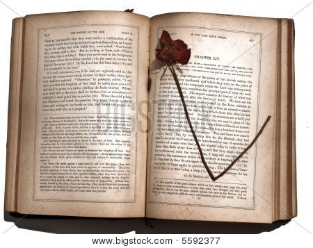 Dried Rose Antique Book