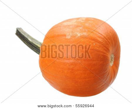 Pumpkin Isolate On White