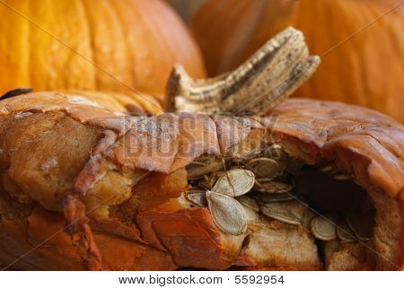 Decaying Pumpkin