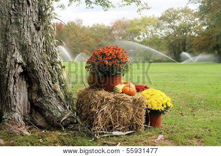 Fall Fairway