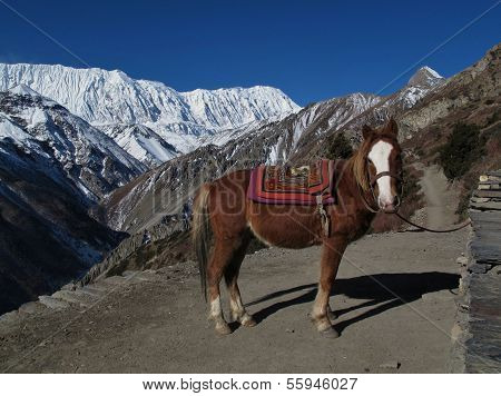 Horse and Tilicho Peak, Annapurna Conservation Area, Nepal. poster