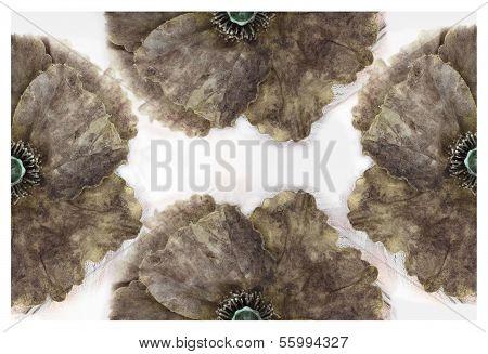 Beautiful Worn Grunge Flower Background