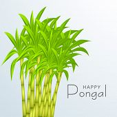 Happy Pongal, harvest festival celebration in South India with sugarcane on blue background.  poster