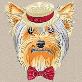 hipster dog Yorkshire Terrier breed in a Straw boater and bow tie poster