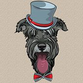 hipster dog Schnauzer breed in a gray hat and bow tie poster