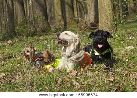 Dogs Lying In The Woods