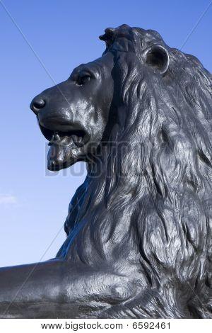 King Of Trafalgar