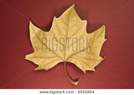 Leaf Dry