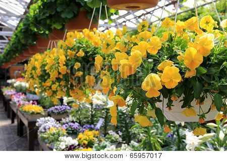 Bright and cheery hanging plants