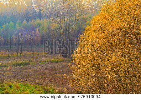 Autumn Landscape View Fields Woods Fall Colors