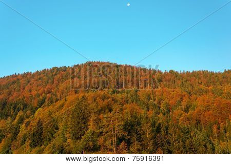 Autumn forest with a setting moon