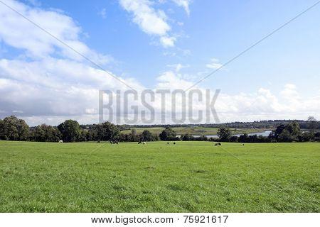 Lush Green Longford Farmland