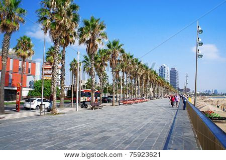 Sea boulevard of Barceloneta