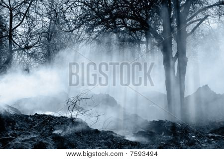 Forest With Smoke