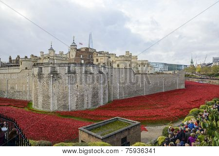 LONDON, UK - NOVEMBER 08: 'Blood Swept Lands and Seas of Red' installation at Tower of London. November 08, 2014 in London. The ceramic poppies were planted to mark the centenary of WWI's outbreak.