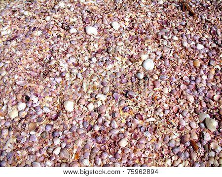 Shells on beachside