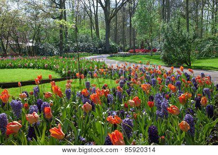 KEUKENHOF GARDEN NETHERLANDS - APRIL 08: Keukenhof is the world's largest flower garden with 7 milli