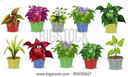 Different kinds of potted plants for gardening