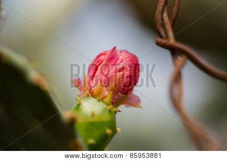 red macro cactus