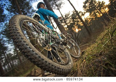 The rear wheel of a mountain bike on an outdoor trail through the woods at sunset. The cyclist has just skidded and came to a full stop just moments ago