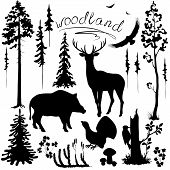 Set of silhouettes of woodland plants and animals. poster