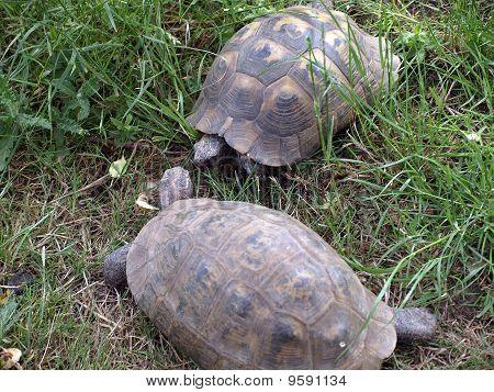 Tortoise Brief Encounter