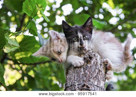 Two Kittens Sitting On Tree