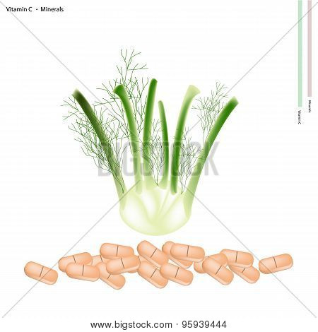 Fresh Fennel Bulb with Vitamin C and Minerals
