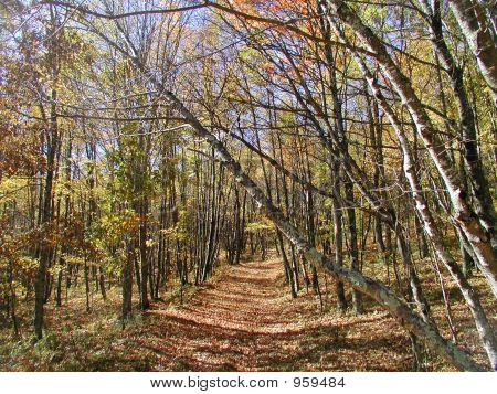 Wooded Path In Fall