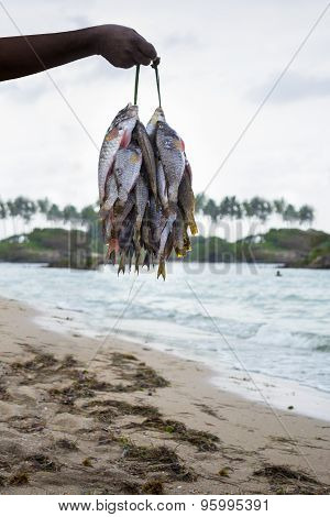 Person Holding Catch Of Ocean Fish On String