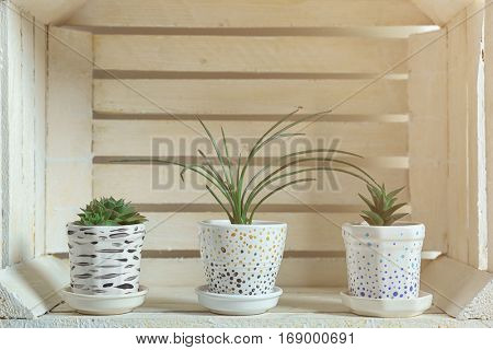 White crocks with succulents in wooden box