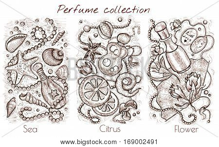 Graphic collection with sea, citrus and flower fragrances on white. Hand drawn engraved illustration. Perfume bottles and natural cosmetics ingredients, vintage design elements