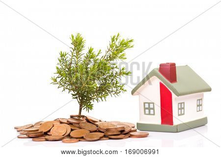 Coins, house and plant isolated on white background
