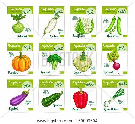 Veggies and vegetables price cards. Vector labels or tags set of kohlrabi, daikon radish and cauliflower, green pea, pumpkin, broccoli. Farm fresh zucchini and patisony squash, beet and eggplant, bell pepper and onion leek, eggplant