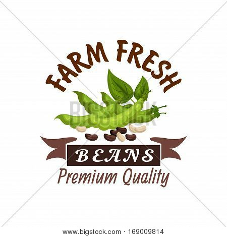 Beans vector icons or poster. Organic farm fresh legume bean pods or soybeans harvest with leaves and seeds. Vegetarian or vegan healthy nutrition food and cuisine design with ribbon for grocery store or market