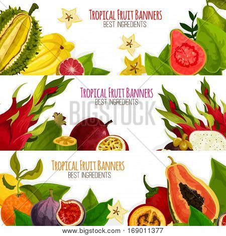 Fruit banners of exotic fruits with tropical fresh mango, grapefruit or red orange, passion fruit maracuya and feijoa, carambola and dragon fruit or pitaya, guava and juicy longan with figs and rambutan, durian and mangosteen. Vector horizontal set