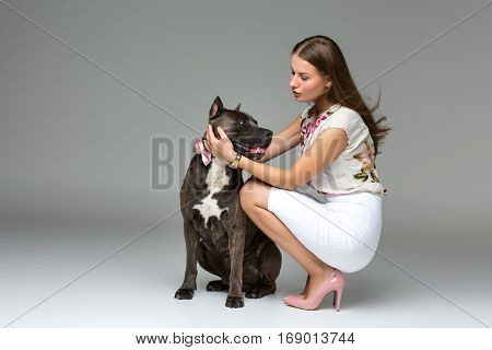 Beautiful elegant happy young woman in white dress hugging adult grey amstafford terrier dog with bow on neck. Studio shot over grey background. Copy space.