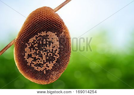 Close up of honeycomb on spring background