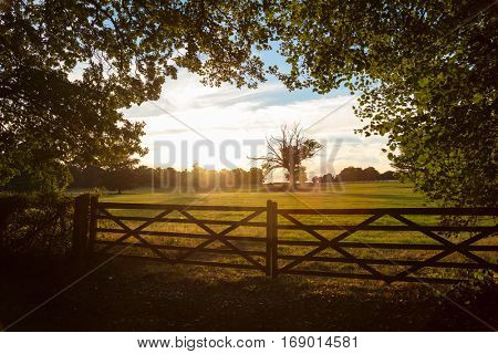 Tranquil view of country farm gate and trees in English or British countryside field at sunset or sunrise