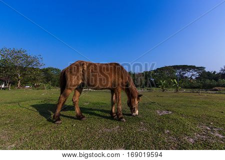 The Horses eating gress in the field