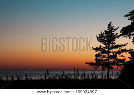 View of calm sea at sunset with silhouette of the pine and place for your text horizontal