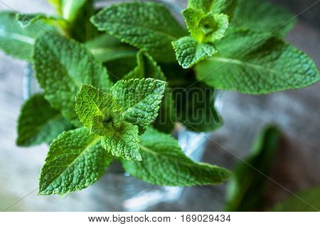 Top view of fresh organic mint in glass on wooden background selective focus