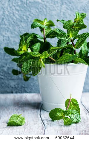 Fresh organic mint in white bucket on wooden table selective focus vertical