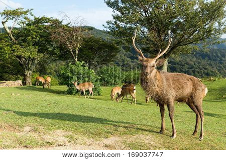 Group of wild deer