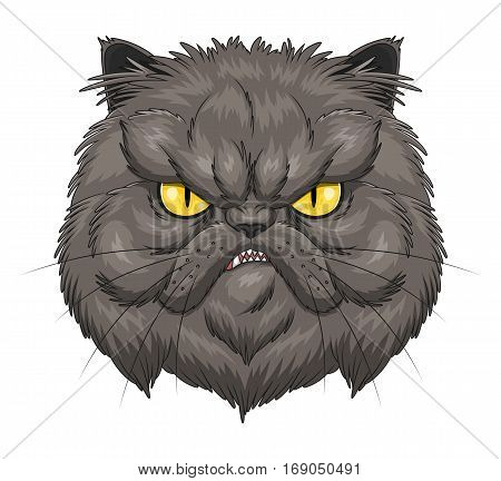 Face of angry Persian cat on the white background.
