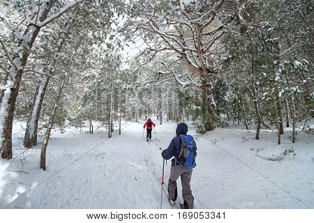 nordic skiers in snowy forest of Etna Park, Sicily