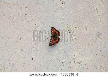 Black and orange butterfly on a gray rough wall